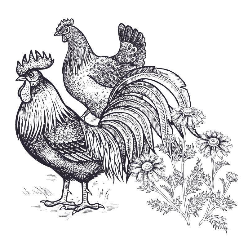 Décoration avec l'oiseau et les fleurs Poule de volaille de main réaliste et coq et camomille de dessin d'isolement sur le fond b illustration stock