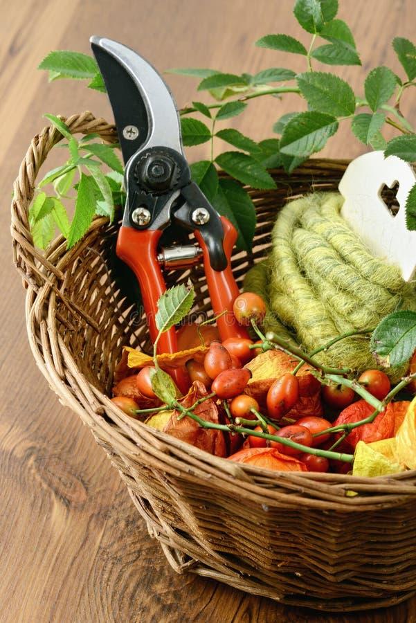Download Décoration D'automne Avec Des Cynorrhodons Et Des Outils Photo stock - Image du floral, aubépine: 76078276