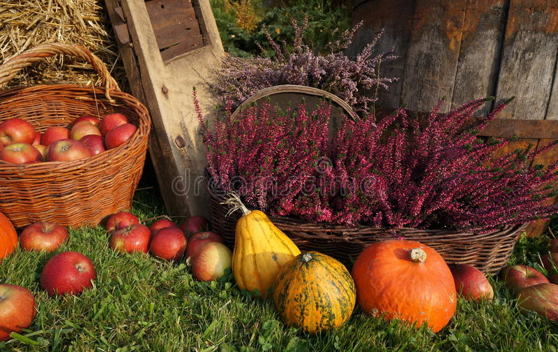 d coration d 39 automne potirons courge fleurs de bruy re et panier en osier avec des pommes. Black Bedroom Furniture Sets. Home Design Ideas