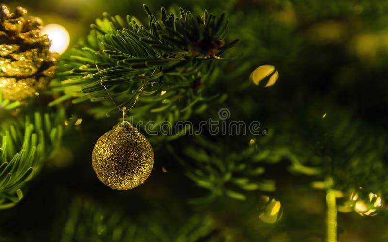 Décoration d'or de boule d'arbre de Noël accrochant sur la branche impeccable entourée pour être lumières de fête L'espace pour l image libre de droits