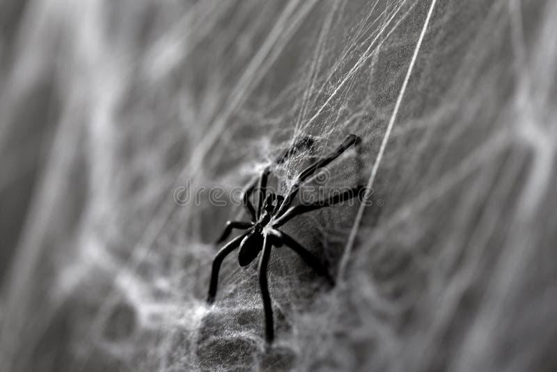 Décoration de Halloween d'araignée noire de jouet sur la toile d'araignée image stock