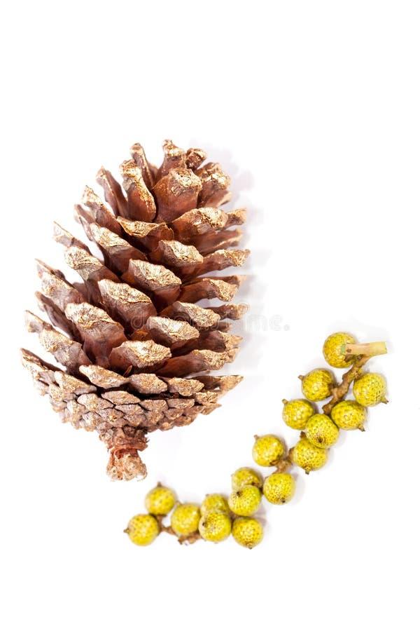 Décoration de Noël de cône de pin peinte par or Traditionnel simple photographie stock libre de droits