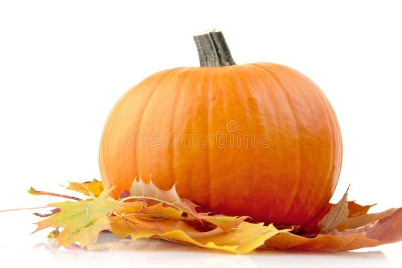 Décoration de potiron avec des feuilles d'automne pour le jour de thanksgiving sur le blanc photo stock