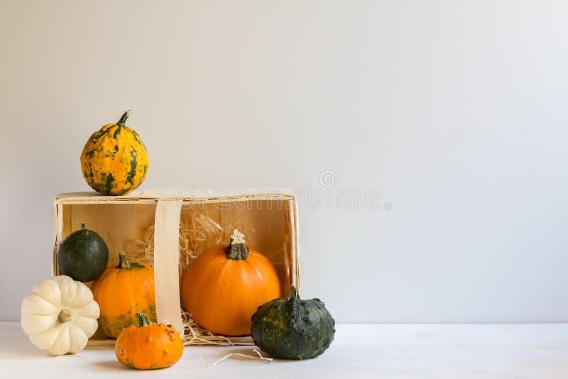 Décoration de potiron pour Halloween, potirons ornementaux colorés, courges, automne, récolte, horizontale, avec l'espace de copi photo libre de droits