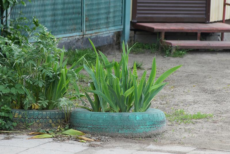Décoration de vieux pneus de voiture bleus au sol avec la végétation verte image libre de droits