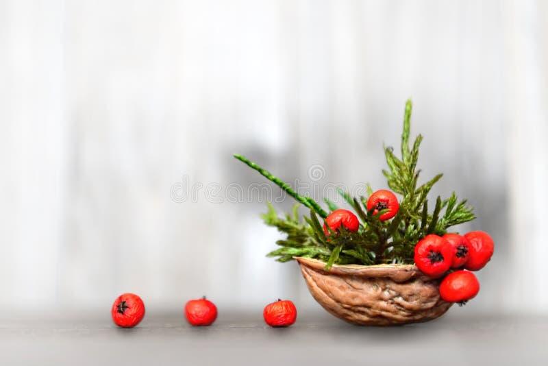 Décoration naturelle de Noël : Disposition dans la coquille d'écrou photographie stock libre de droits