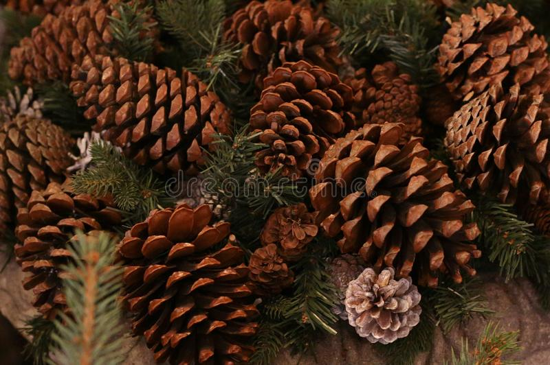 Décoration traditionnelle de grand fond rustique naturel brun de nombre entier de forêt de cône de sapin images stock