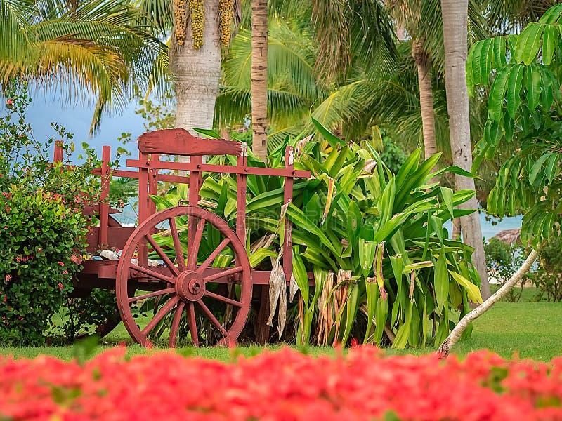 Décoration tropicale de jardin de vieux chariot rouge de boeuf par la mer image stock