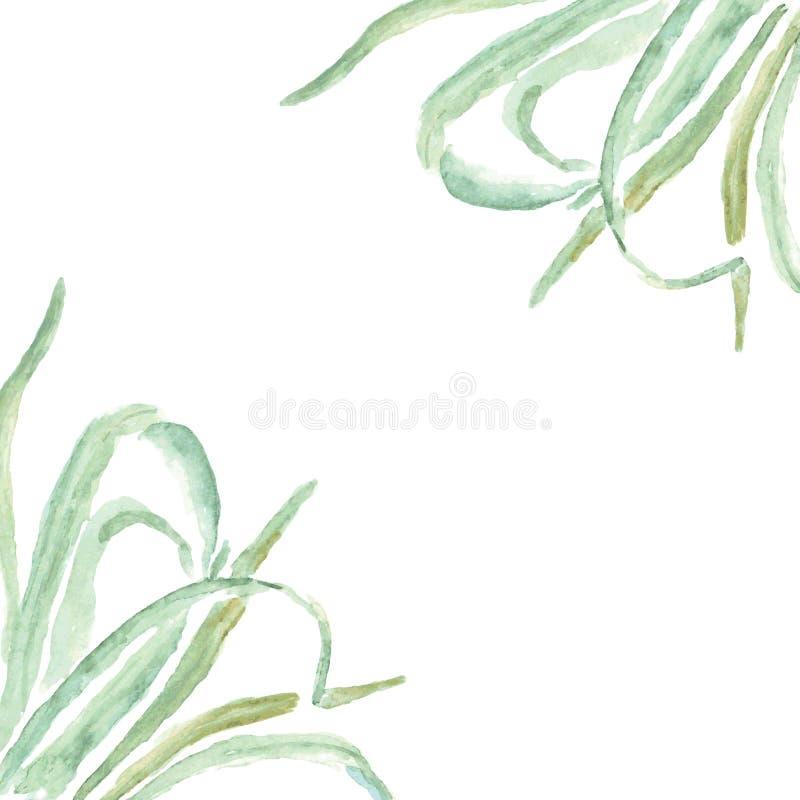 Décorations d'herbe de cadre d'Eco et cartes de voeux illustration libre de droits