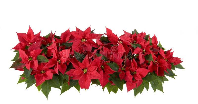 Décorations de Noël - poinsettia rouge images stock