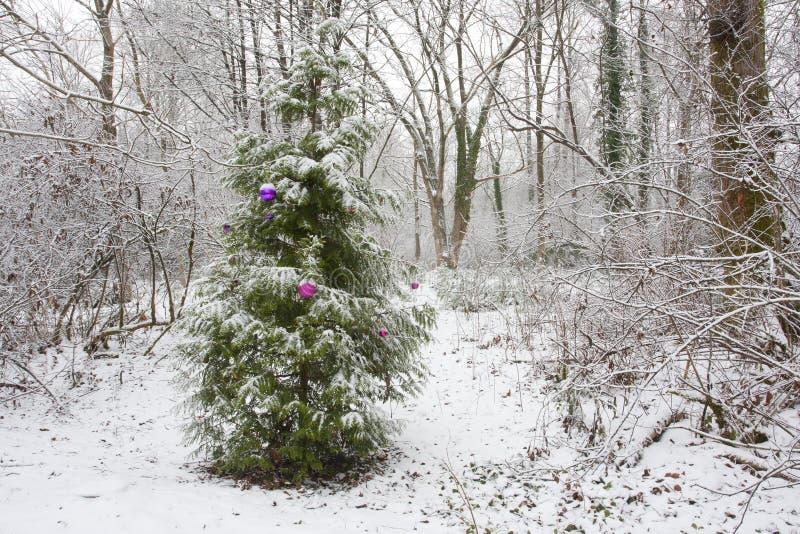 Décorations simples sur l'arbre en nature à Noël photo libre de droits