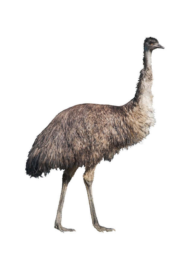 Découpage d'Emu