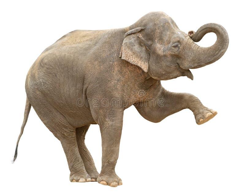 Découpage femelle de salutation d'éléphant d'Asie photographie stock libre de droits