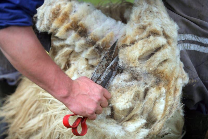 Découper l'ouatine de moutons photographie stock libre de droits