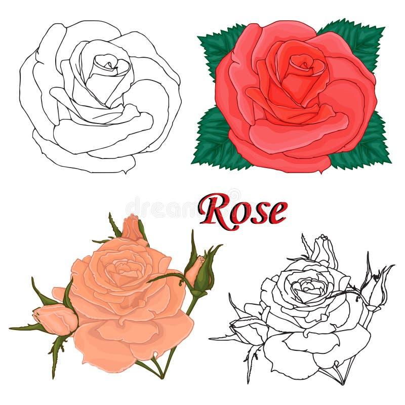 Découpes des fleurs. roses. illustration libre de droits