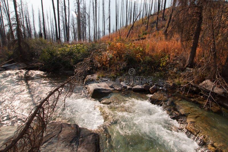 Découvrir la crique en parc national de glacier au Montana Etats-Unis images stock