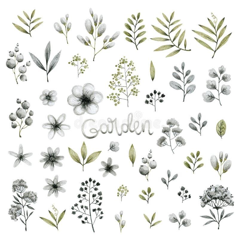 Définir des isolats de jardin pour plantes vertes et grises, feuilles, branches et fleurs, dessin au crayon à main levée illustration libre de droits