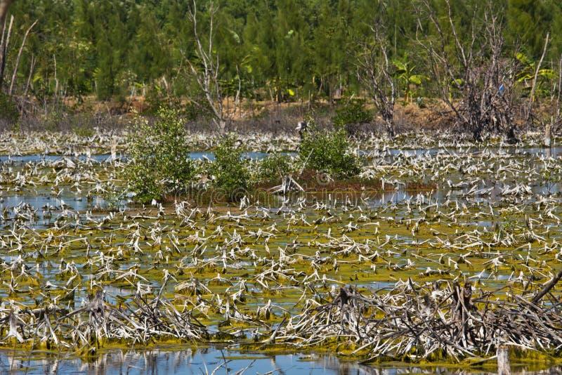 Dégradation de forêt de palétuvier image stock