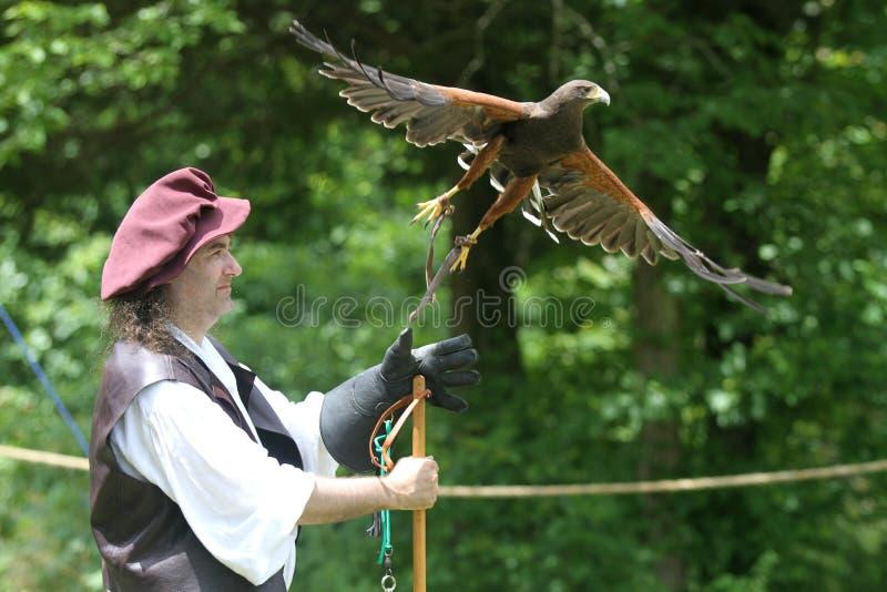 Démonstration de fauconnerie avec le faucon effectuant le vol images stock