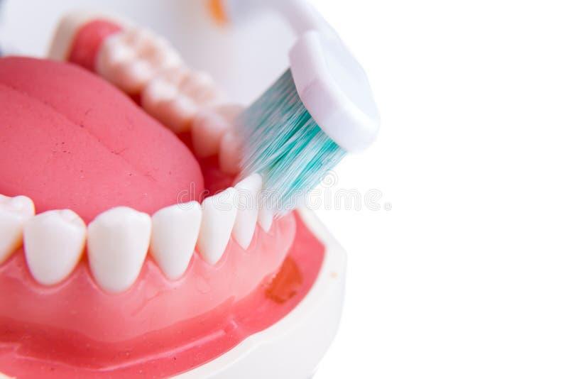 Démonstration sur le brushi conique doux et mince de brosse à dents de poil photo libre de droits