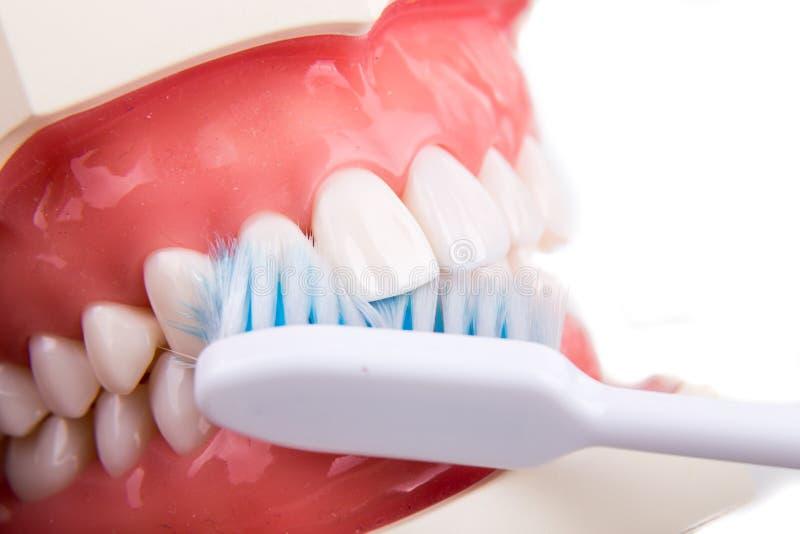 Démonstration sur le brushi conique doux et mince de brosse à dents de poil images libres de droits