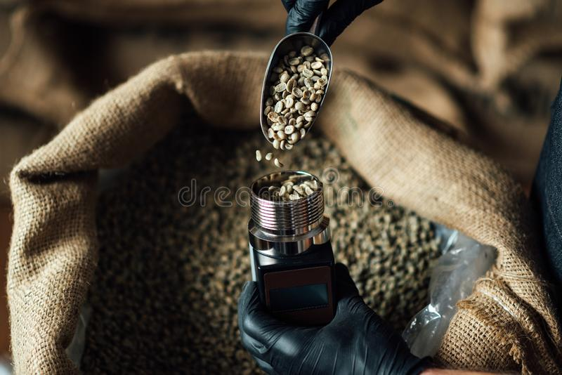 Déposer les fèves de café dans un appareil de mesure de l'humidité à l'aide d'un scoop de métal sur un fond de sac de burlap photographie stock libre de droits