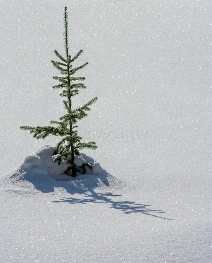 Dérives de neige dans la forêt d'hiver photo libre de droits