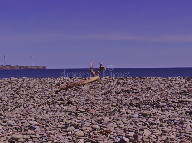 Dérivez la plage rocheuse en bois 3499 photographie stock libre de droits