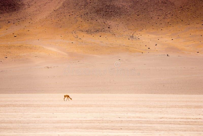 Désert d'Atacama images stock