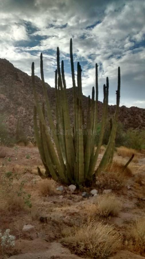 Désert de cactus images stock