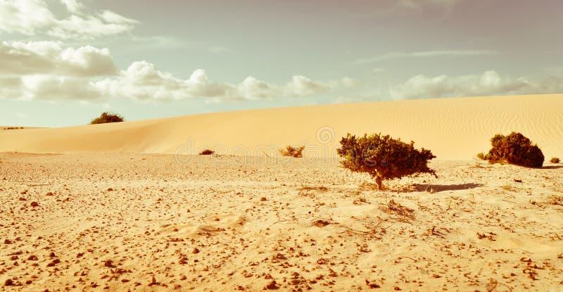 La vie contre le désert. Petites usines sur la mer des sables. photographie stock libre de droits