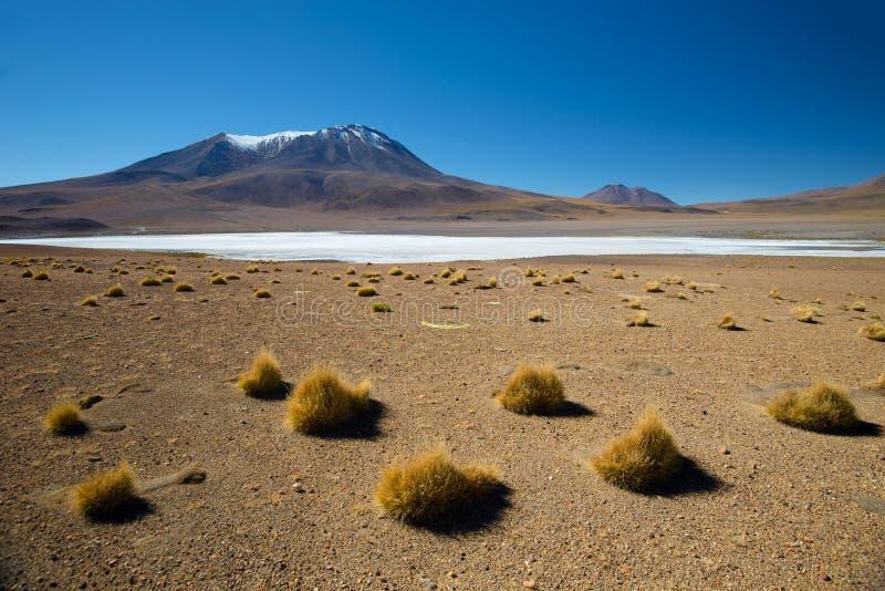Désert de la Bolivie Altiplano andin en Bolivie photo libre de droits