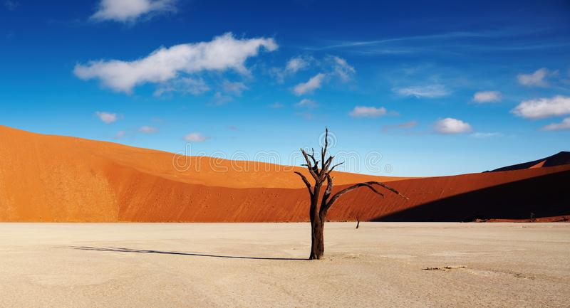 Désert de Namib, Sossusvlei, Namibie images libres de droits