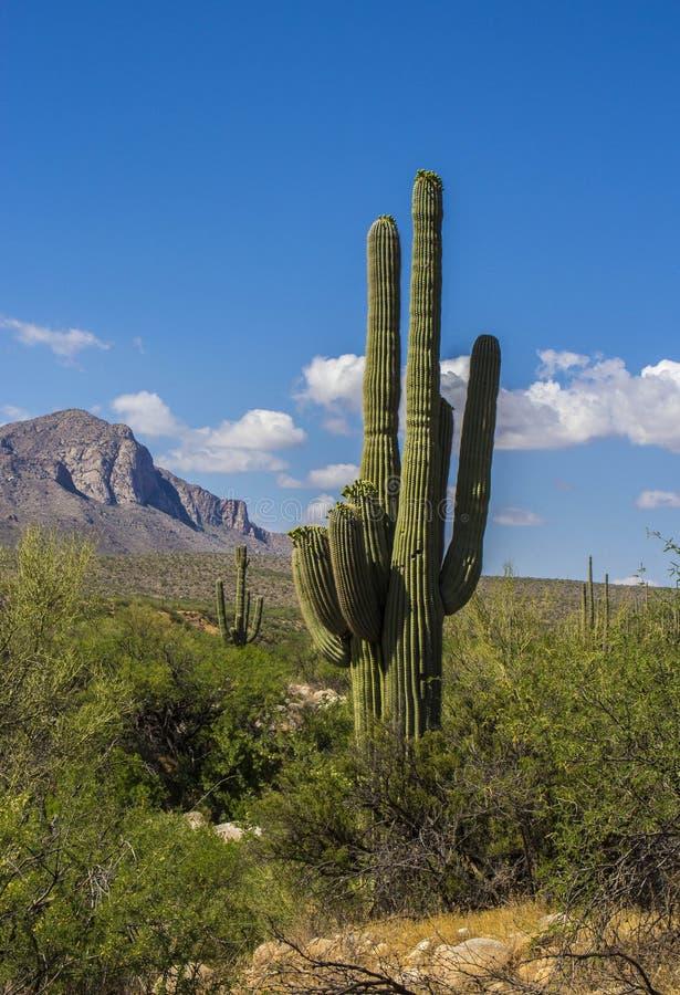 Désert de Tucson Arizona images stock