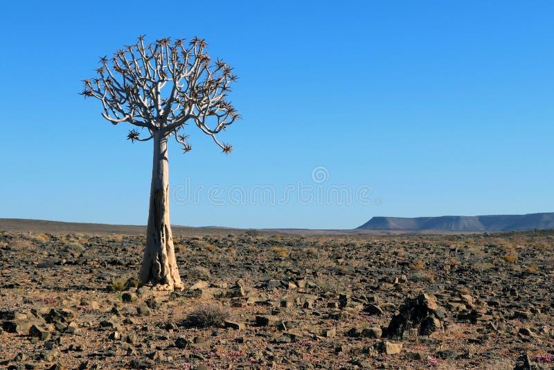 Désert en pierre avec l'arbre Namibie Afrique de tremblement images libres de droits