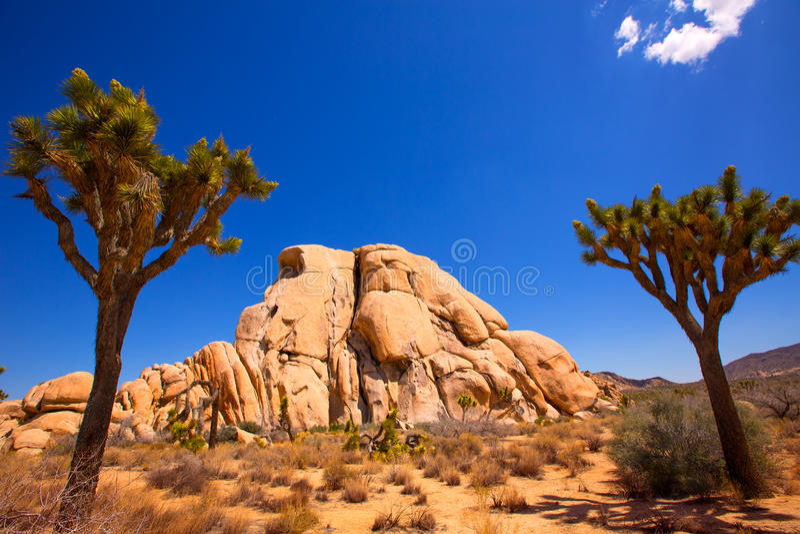 Désert la Californie de Mohave de vallée de Joshua Tree National Park Yucca image libre de droits