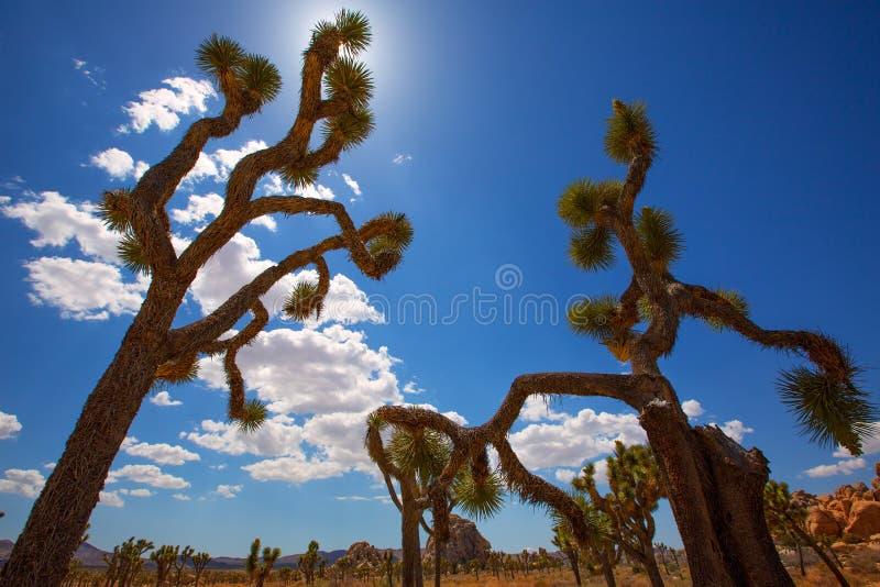 Désert la Californie de Mohave de vallée de Joshua Tree National Park Yucca images stock