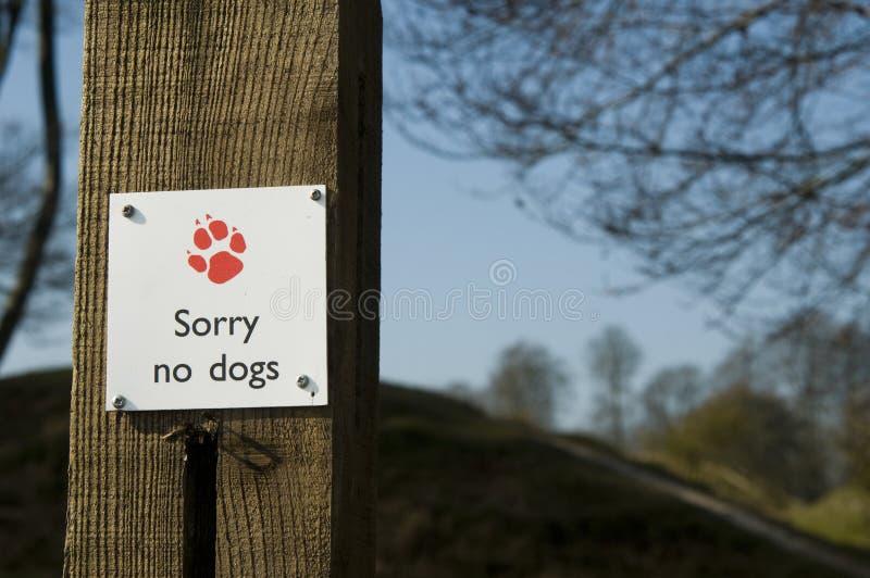 Désolé aucun chiens image stock