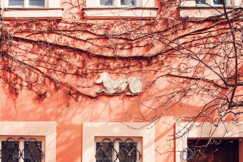 Détail architectural, mur rose avec le chien Élément médiéval abstrait d'architecture de Prague, République Tchèque photo libre de droits