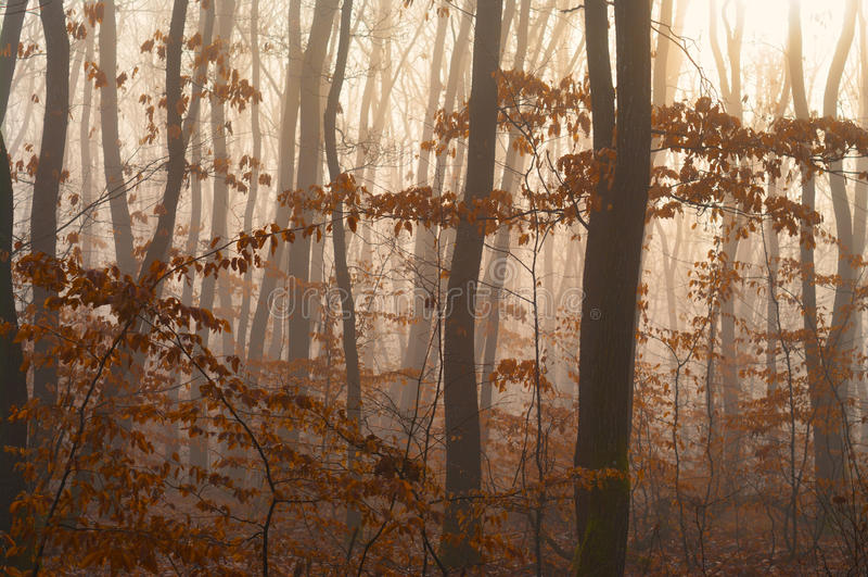 Détail brumeux de forêt d'automne photo stock