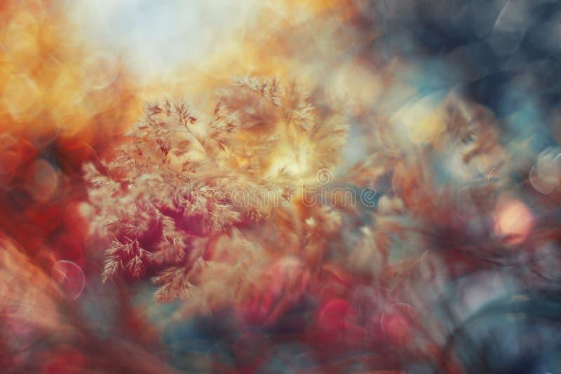 Détail coloré d'herbe dans le rose image libre de droits