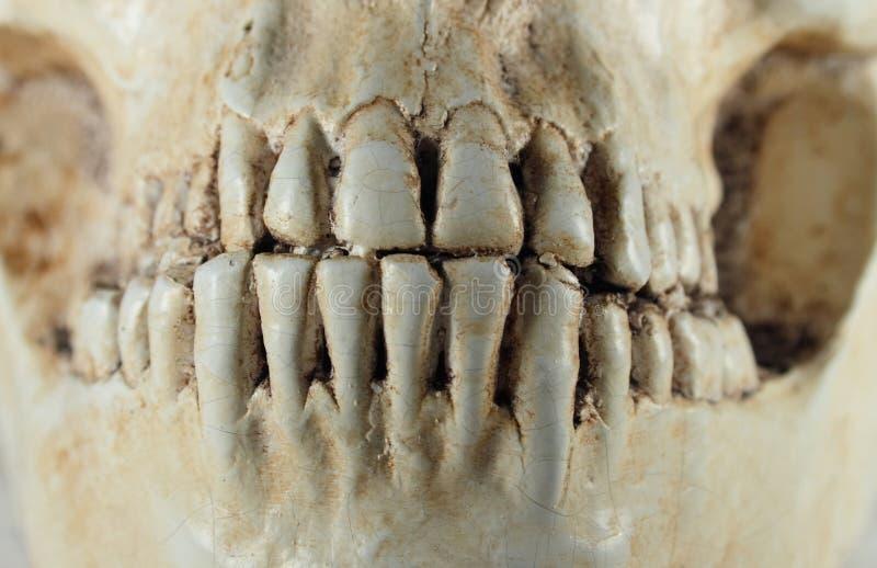 Détail de crâne humain photos stock