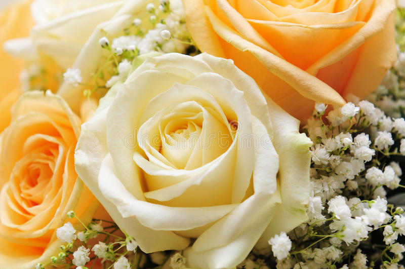 Détail de fleur photographie stock