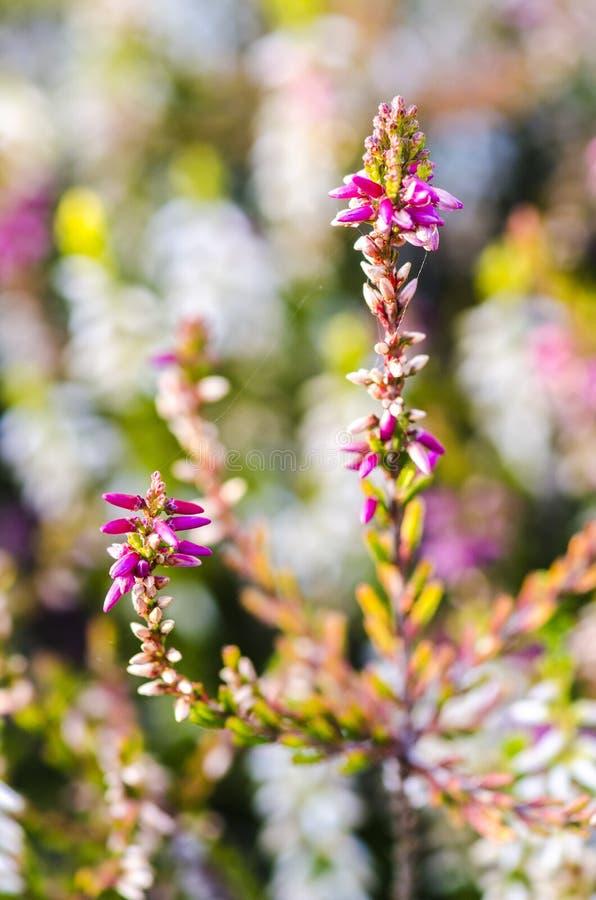 Détail de fleur photo stock