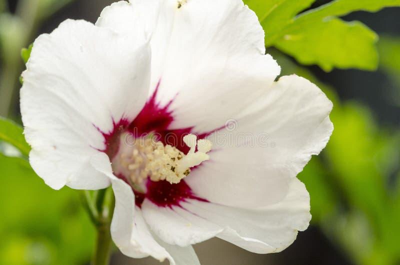 Détail de fleur image stock