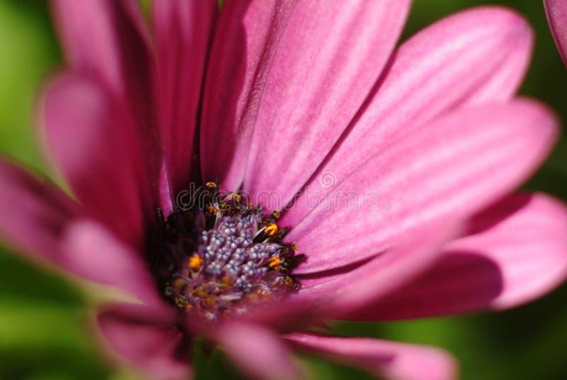 Détail de fleur images stock