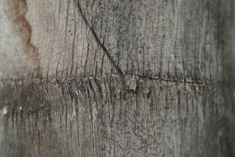Détail de joncteur réseau de palmier images libres de droits