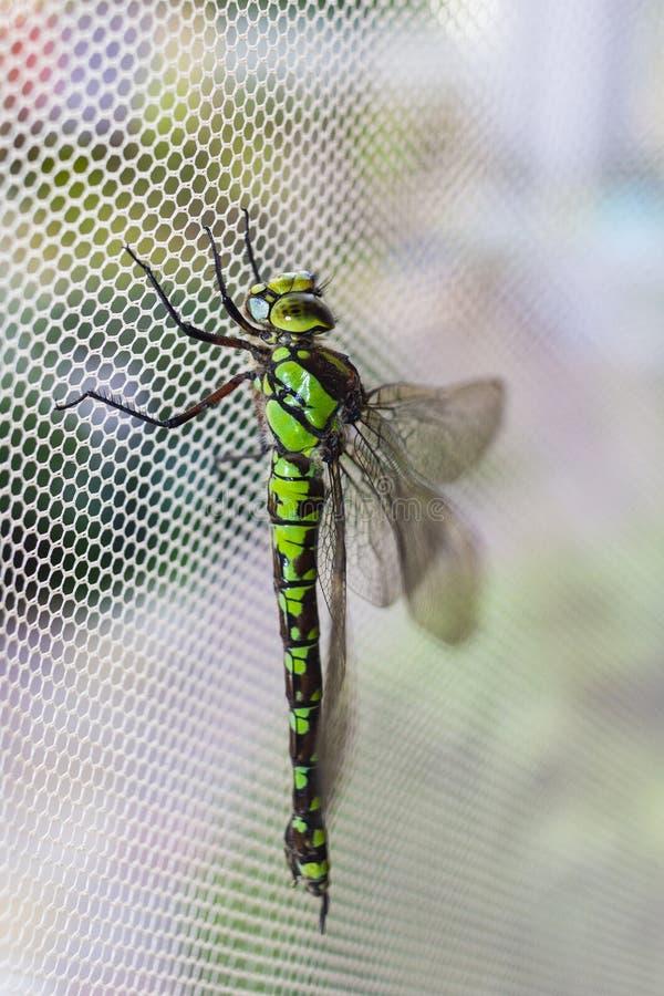 Détail de la libellule l'image de la libellule est sauvage avec fond flou image stock