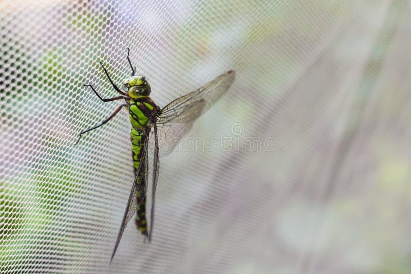 Détail de la libellule l'image de la libellule est sauvage avec fond flou photographie stock