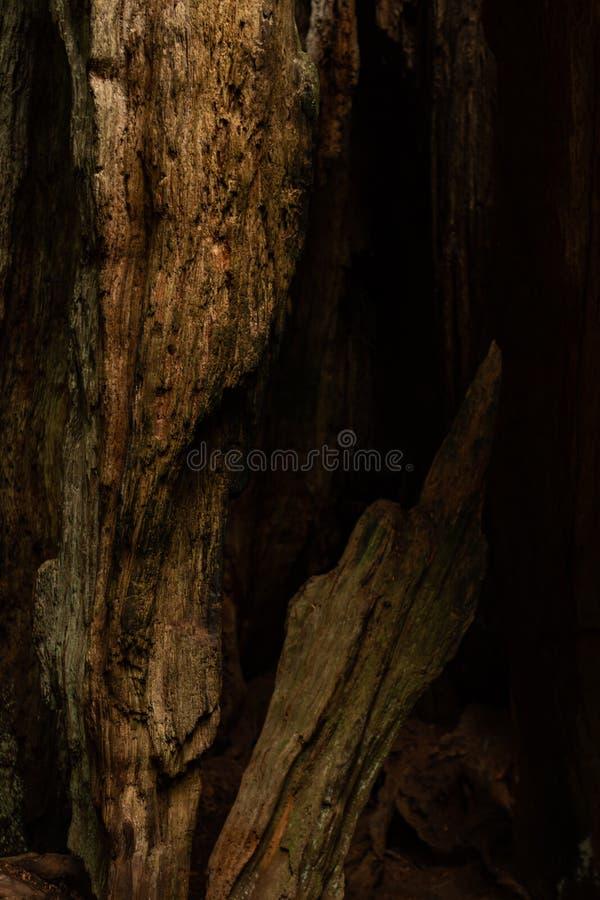 Détail de la rotation de l'arbre brisé images libres de droits